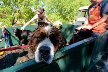 Prijatelji životinja skupljaju pomoć za životinje na području pogođenom poplavama