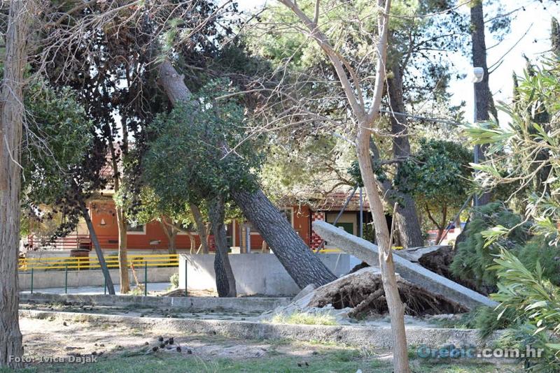 Oštećeni bor na Trstenici