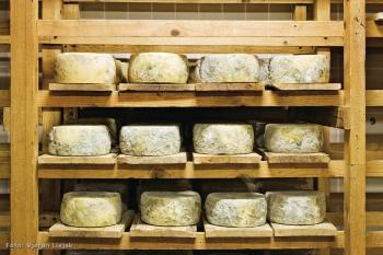 Ilustracija - proizvodnja sira