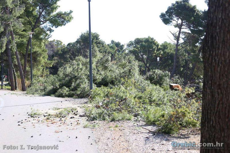 Posječeni bor uz cestu pored hotela Amines Grand Azur