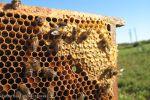Ilustracija: proizvodnja meda