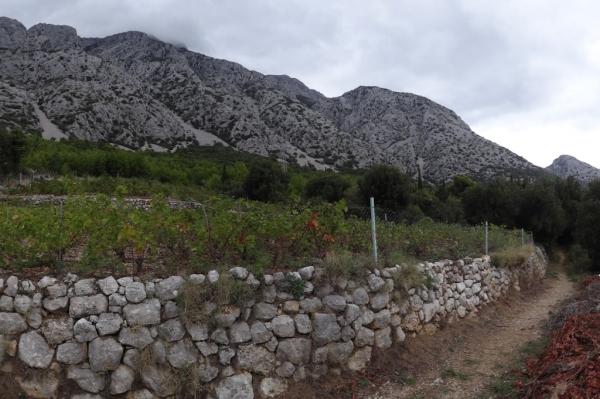 Vinogradi na padinama Sv. Ilije